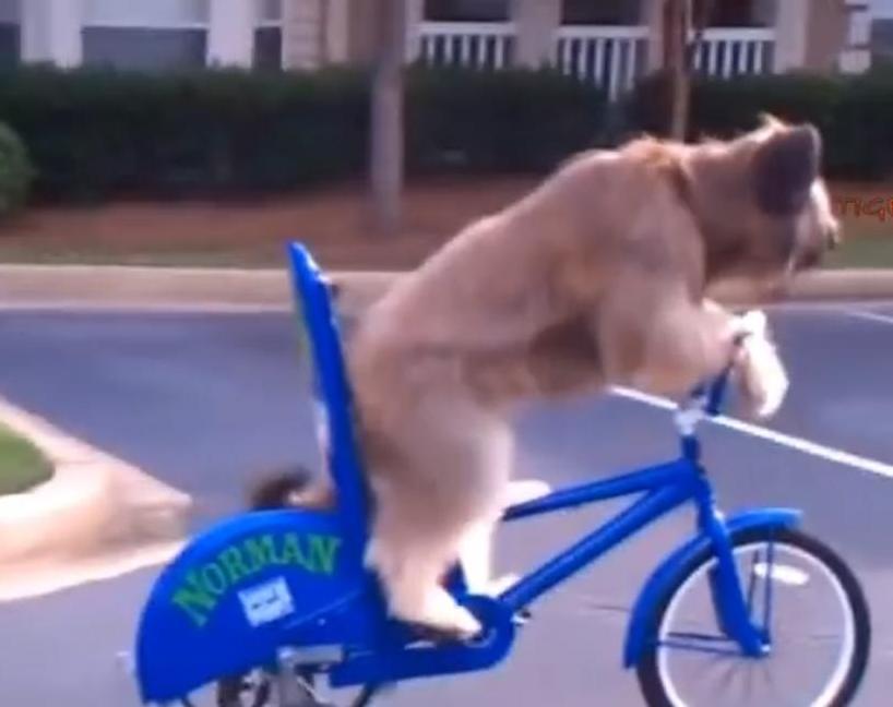 Pies jedzie na rowerze? Tak, oczy was nie mylą... ;D