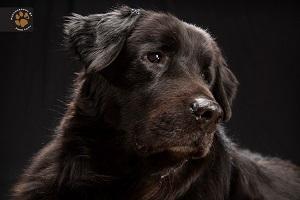 Czarne psy na zdjęciach
